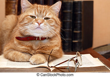 Scientist Cat - Closeup of ginger cat lying on old book near...