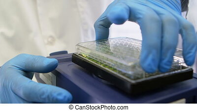 Scientist closing the lid of microplate 4k - Close-up of...