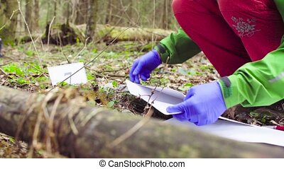 Scientist ecologist in the forest taking samples of plants