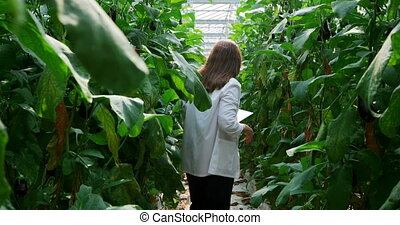 Scientist examining plants and using digital tablet in the ...