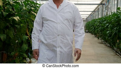 Scientist examining plants in greenhouse 4k - Male scientist...