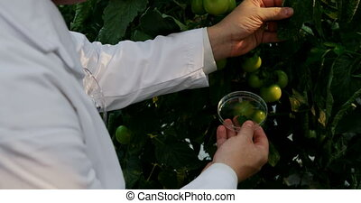 Mid section of scientist holding a specimen and checking plant in greenhouse 4k
