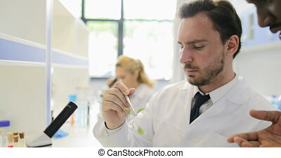 Scientist Man Examining Plant Example With Microscope Working In Genetics Laboratory With Group Of Geneticists