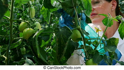 Scientist watering plant in the greenhouse 4k - Female ...