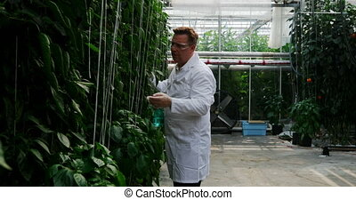 Scientist watering plant in the greenhouse 4k - Male ...