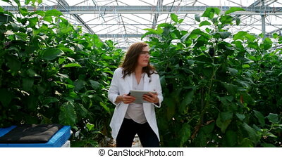 Scientist with digital tablet examining plants in the ...