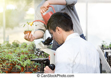 Scientist with microscope in green house - Biologist in...