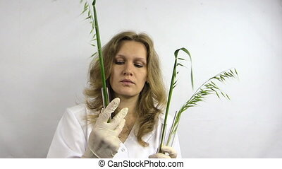 Scientist woman in white robe research flasks with genetically modified oat plants in laboratory. Shot. Full HD 1080p. Progressive scan 25fps. Tripod.