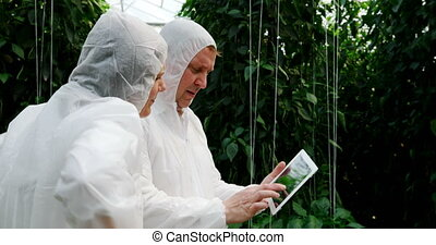 Scientists discussing over digital tablet in the greenhouse ...