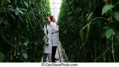 Scientists examining plants in greenhouse 4k - Two ...