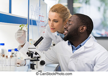 Scientists Looking At Sample Of Plant Working In Genetics Laboratory, Mix Race Couple Of Researchers Analyzing Result Of Experiment