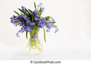 scilla in vase