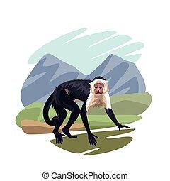scimmia, animale, giungla, selvatico
