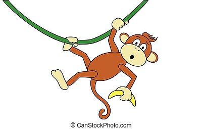 scimmia, banana