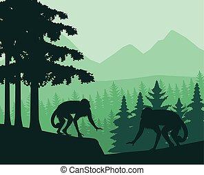 scimmia, giungla, animale, selvatico