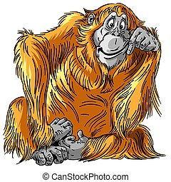 scimmia, orangutan, cartone animato, grande