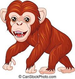 scimmia, proposta, carino, isolato