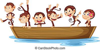 scimmie, barca