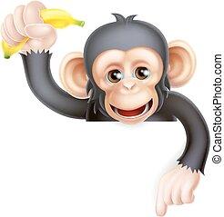 scimpanzé, banana, indicare, scimmia