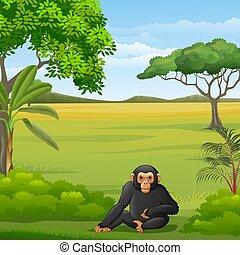 scimpanzé, savana, cartone animato