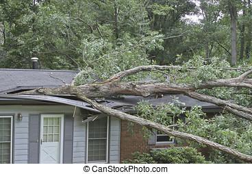 scissioni, albero quercia, grande, casa, piccolo