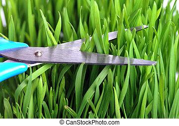 scissors cutting fresh green grass