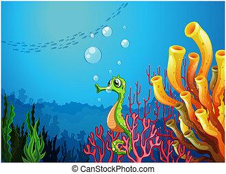 scogliere, seahorse, corallo