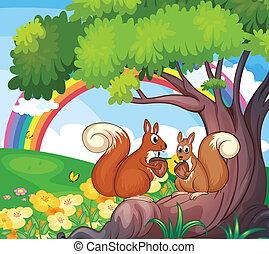 scoiattoli albero