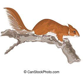 scoiattolo, vecchio, vettore, albero