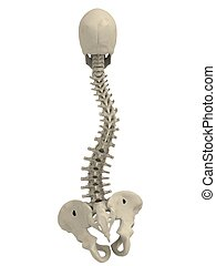 scoliosis - 3d rendered illustration of human spine with...
