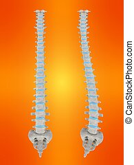 scoliosis - 3d rendered illustration of human healthy and...