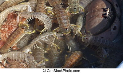 Scolopendra in Asian Cuisine - Scolopendra in Asian cuisine,...
