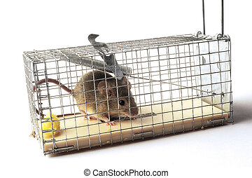 Scoop or mouse trap - Scoop mouse or mouse trap before the...