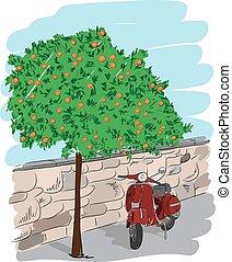 Scooter near an orange tree, vector illustration