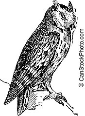 Scops owl perched on branch, vintage engraving. - Scops owl ...