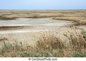 Scorched coastal prairie on saline earth.