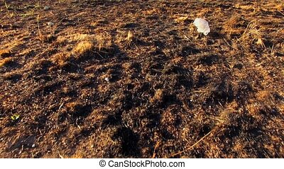 Scorched dry earth under the scorching sun - Walk on the...