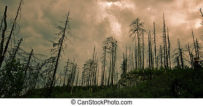 scorched forest - scorched fores over moody cloudscape