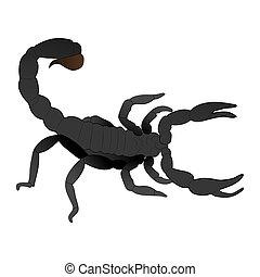Scorpion color illustration isolated on white background.
