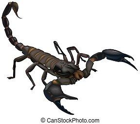 Scorpion (Scorpionida sp.)