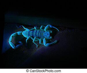 A photograph of a scorpion florescing under ultraviolet light.