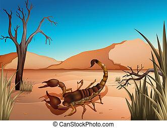 scorpione, deserto