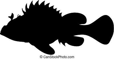 scorpionfish, (scorpaena)
