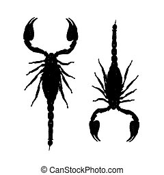 scorpions, conception, silhouette, ton, noir