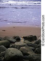 scotch on the rocks - a bottle of whiskey on the rocks