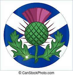 scotish, bandera, y, cardo, botón