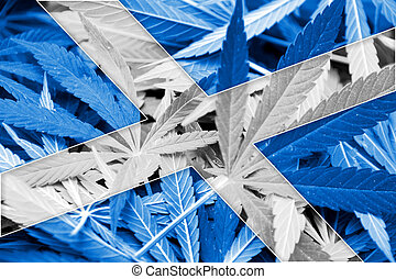 Scotland Flag on cannabis background. Drug policy. ...