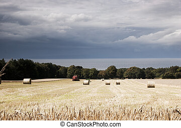 Scottish arable landscape - Harvest at Culzean Castle on the...