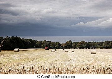 Scottish arable landscape - Harvest at Culzean Castle on the...