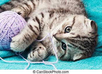 Scottish fold kitten playing with a ball of yarn